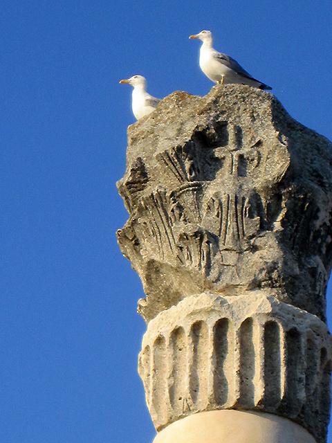 Romeinse meeuwen (Nin)