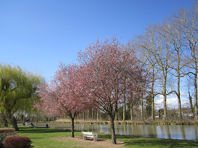 Briare le Canal: bloemkens in uw haren, bloemkens van de waterkant