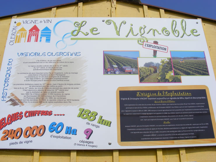 Vignoble Vincent